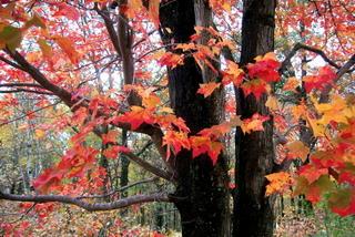 FallFoliage4_cloudy