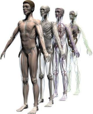 Human3dbody