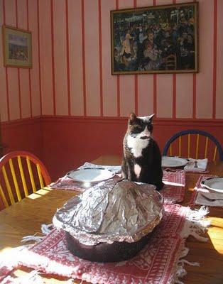 Turkey cat 2
