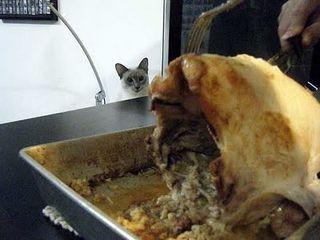 Turkey cat 3