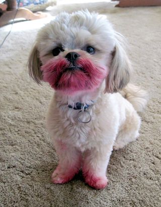 Lipstick dog
