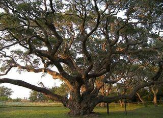 Trees19