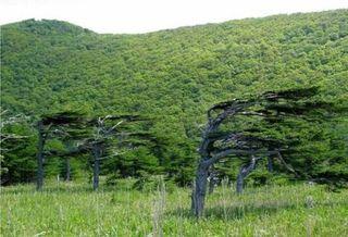 Trees21