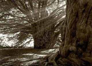 Trees9