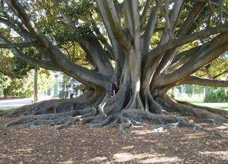 Trees23