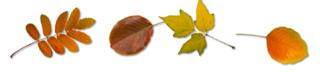 Divider autumn