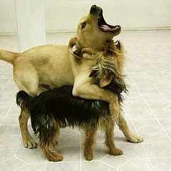Dogsongs