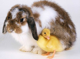 Easter_Buddies_medium