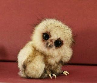 Awww...cute