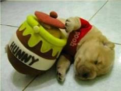 Puppy024
