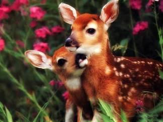 Animal_babies_mamma16