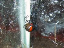 Spider017