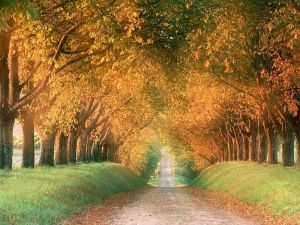 Autumningermany