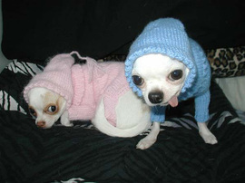 Dogs_sweaters_1