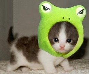Frogkitten03_1