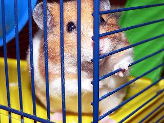 Hamster7_1