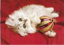 Ornamentcat