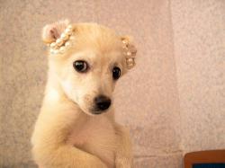 Princess_pup